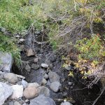 Cache Creek runs right around our campground, Brookside Campsite,